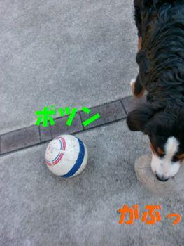 2008_0125_132526-CIMG0376.jpg