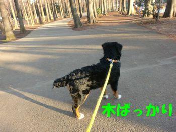 2008_0126_075332-CIMG0392.jpg