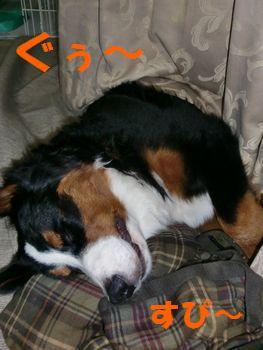 2008_0128_235149-CIMG0563.jpg