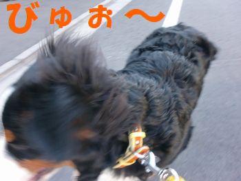 2008_0201_090953-CIMG0640.jpg