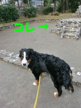 2008_0204_074732-CIMG0747.jpg