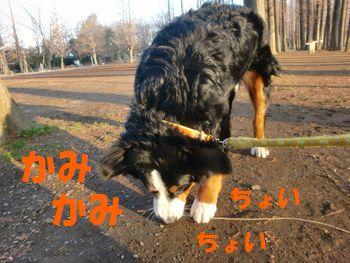 2008_0208_072147-CIMG0936.jpg