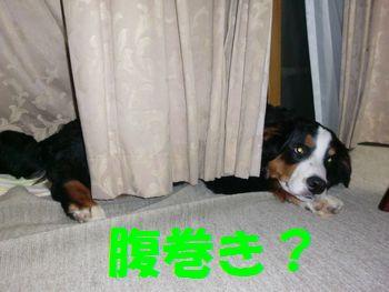 2008_0210_231733-CIMG0988.jpg