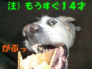 2008_0211_172640-CIMG0998.jpg