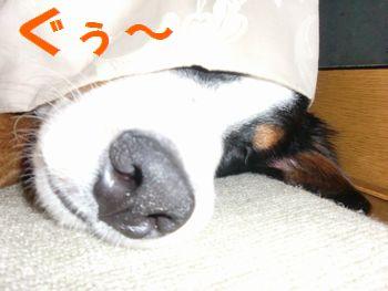 2008_0212_215949-CIMG1061.jpg