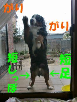 2008_0213_073241-CIMG1069.jpg