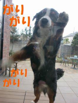 2008_0213_073257-CIMG1073.jpg
