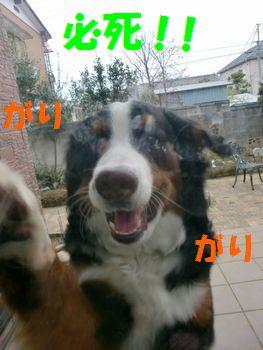 2008_0213_073301-CIMG1074.jpg