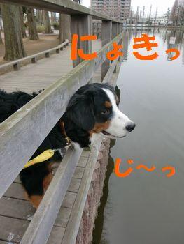 2008_0213_075338-CIMG1094.jpg