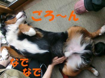 2008_0214_081105-CIMG1103.jpg