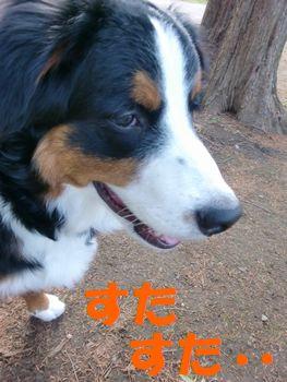 2008_0215_075736-CIMG1139.jpg