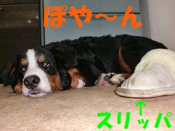 2008_0216_213244-CIMG1187.jpg