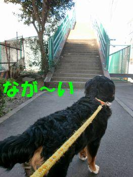 2008_0217_122548-CIMG1271.jpg