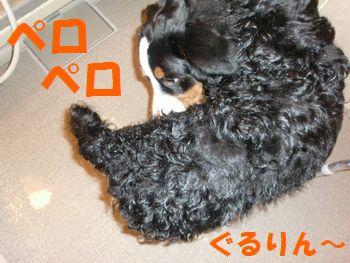 2008_0217_130711-CIMG1317.jpg