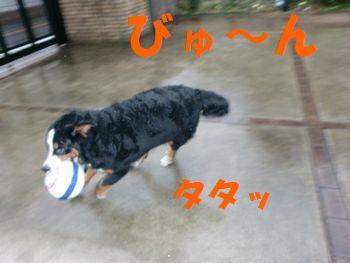 2008_0220_072651-CIMG1429.jpg