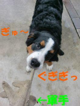 2008_0225_091534-CIMG1780.jpg