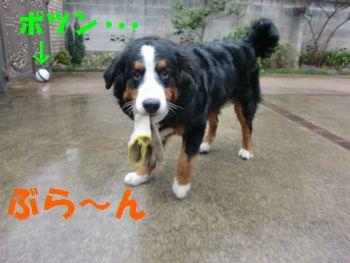 2008_0225_091618-CIMG1785.jpg