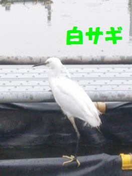 2008_0225_114537-CIMG1819.jpg