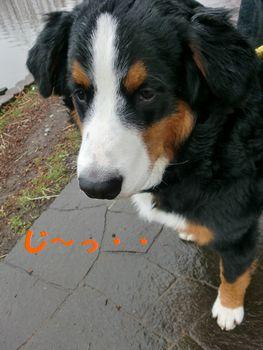 2008_0225_115455-CIMG1841.jpg
