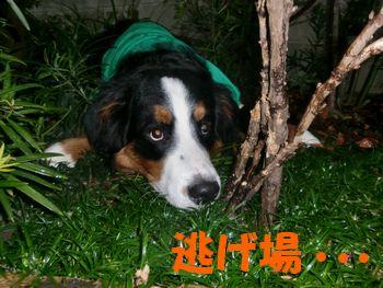 2008_0227_074029-CIMG1897.jpg