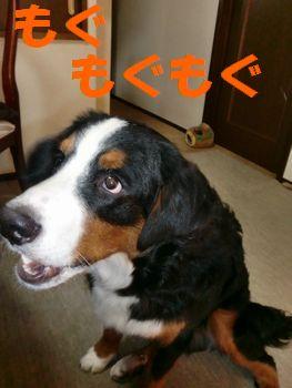 2008_0228_140216-CIMG1949.jpg