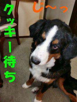 2008_0228_140232-CIMG1951.jpg