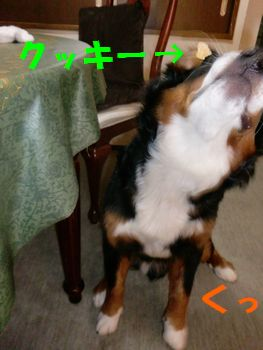 2008_0228_140314-CIMG1953.jpg