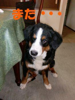 2008_0228_140322-CIMG1954.jpg