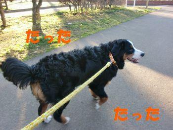 2008_0301_071719-CIMG2079.jpg