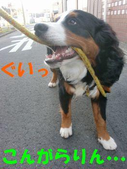 2008_0301_073939-CIMG2092.jpg
