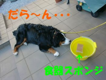2008_0301_074713-CIMG2103.jpg