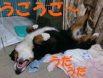 2008_0302_210633-CIMG2160.jpg