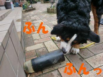 2008_0303_083138-CIMG2182.jpg