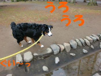 2008_0303_084539-CIMG2221.jpg