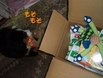 2008_1007_192641-PA070156.jpg