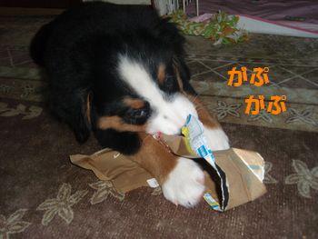 2008_1007_192713-PA070159.jpg