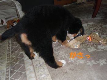 2008_1007_193330-PA070162.jpg