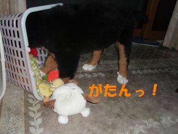 2008_1010_210739-PA100077.jpg