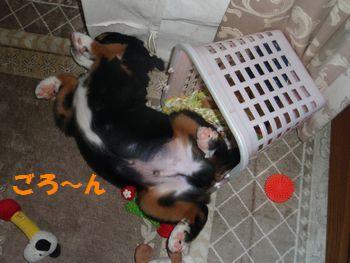 2008_1010_211106-PA100092.jpg