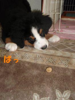 2008_1014_072830-PA140188.jpg
