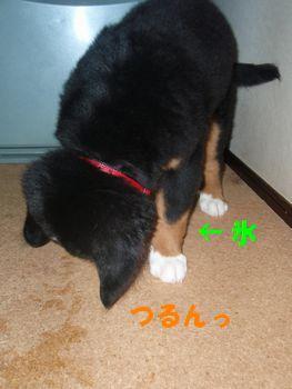 2008_1016_071737-PA160020.jpg