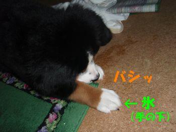 2008_1016_071845-PA160027.jpg