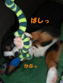2008_1017_224113-PA170102.jpg