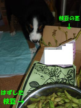 2008_1018_213859-PA180121.jpg