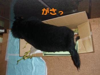 2008_1018_214601-PA180132.jpg