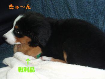 2008_1019_153516-PA190171.jpg