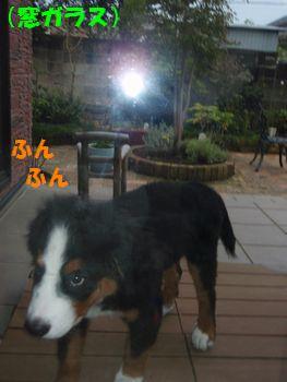 2008_1026_161805-PA260314.jpg