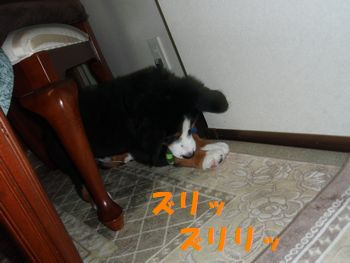 2008_1027_202155-PA270014.jpg