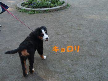 2008_1102_145644-PB020128.jpg