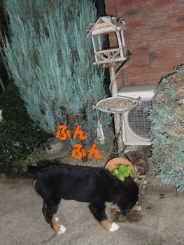 2008_1115_161453-PB150026.jpg